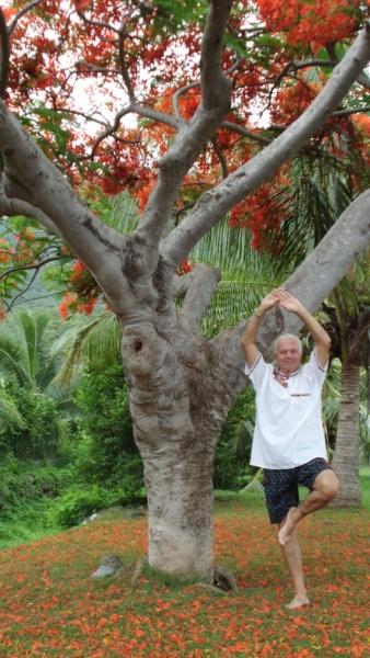 asana_JF_arbre
