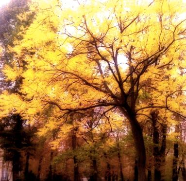arbre_jaune