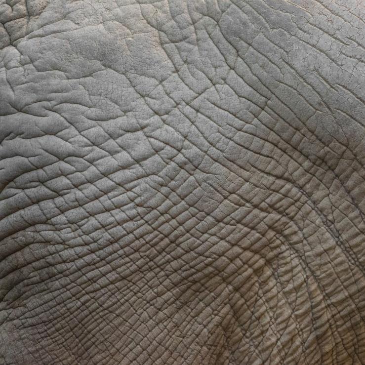 elephant-skin-texture-1506327101vss